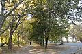 Парк по вулиці Кремлівській 21.JPG