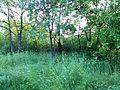 """Парк шума """"Гази Баба"""" 84.jpg"""