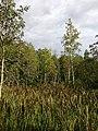 Пено. Орлинка. 2014 - panoramio (8).jpg