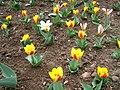 Тбилисскому Ботаническому Саду.jpg