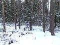 Урочищные места - panoramio (61).jpg