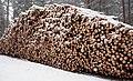 Царникава (Латвия) Вырубают леса (фрагмент) - panoramio.jpg