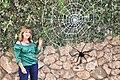 עכביש טווה חוטים פיסול ממטריות וחוטים.jpg