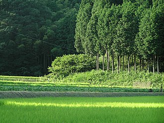 Satoyama - Satoyama landscape of paddy fields and  forest in Sasayama, Hyōgo