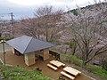 吉野山 中千本にて 2013.4.03 - panoramio.jpg