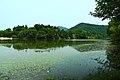 嘉陵风光之苟溪河湿地 - panoramio (7).jpg