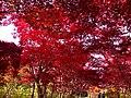 平岡樹芸センター(Hiraoka arboriculture center) - panoramio (21).jpg