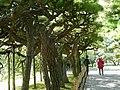 栗林公園 Ritsurin Park - panoramio (1).jpg