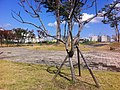광주 광산구 수완동 아름공원 2 - panoramio.jpg
