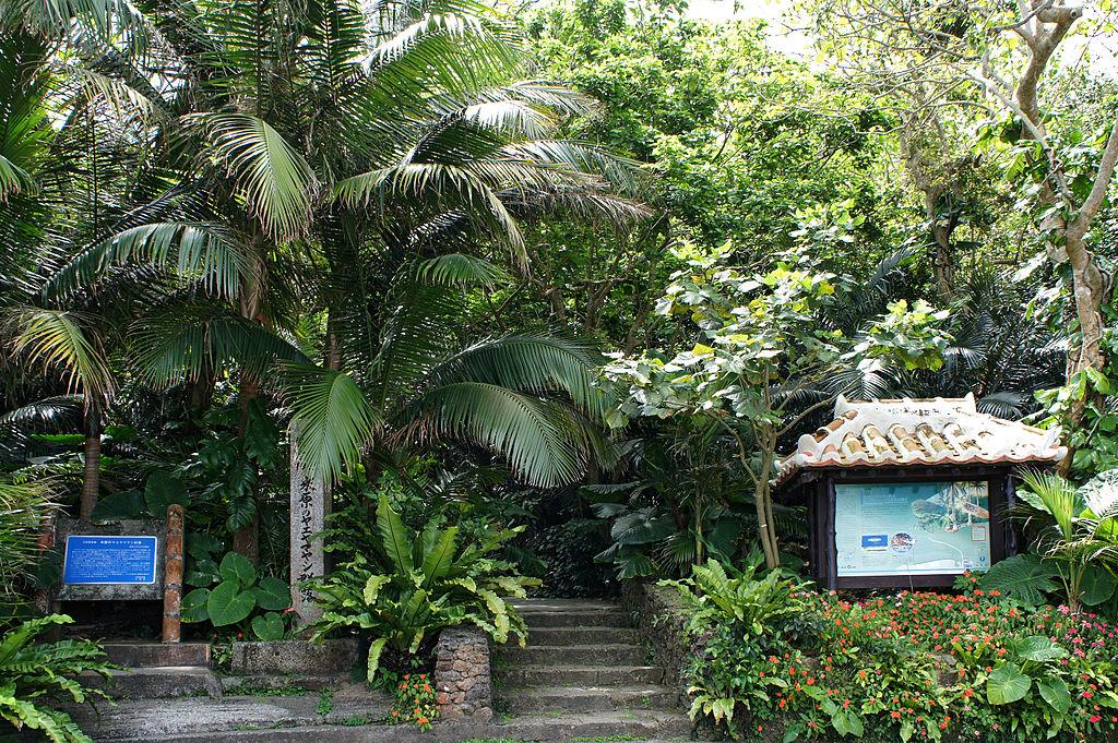 110321 Native forest of Satake palm trees Yonehara Ishigaki Island Japan01s3