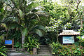 110321 Native forest of Satake palm trees Yonehara Ishigaki Island Japan01s3.jpg