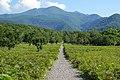 140829 Track Near Furepe Falls Shiretoko Hokkaido Japan08n.jpg