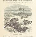 143 of 'Le Désert et le Monde Sauvage ... Illustrations par Yan' D'argent, etc' (11241683965).jpg
