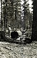 1922. W.L. Jones (left) and F.P. Keen with a treated tree. Southern Oregon Northern California western pine beetle control project. (36188302242).jpg