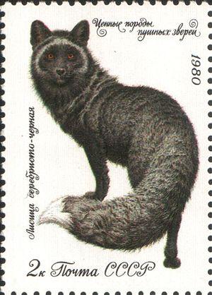 Чернобурка на почтовой марке СССР, 1980 год