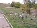 2005-2010. Птицы Донецка (C-740) 193.jpg