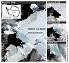 The Wilkins Ice Shelf