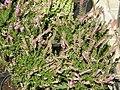 2010. Выставка цветов в Донецке на день города 77.jpg