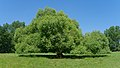 2015.07.07.-16-Mulde Eilenburg--Bruch-Weide.jpg
