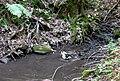 20180522170DR Dohna Naturschutzgebiet Spargrund.jpg