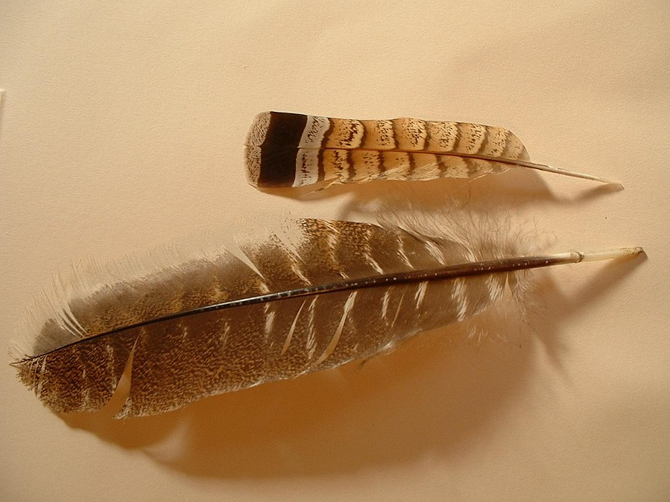 2 feathers