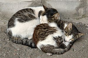 Cat anatomy - Two cats sharing body heat