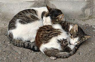 Cat anatomy - Two cats sharing body heat