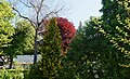 73-101-5030 Чернівецький дендрологічний парк.jpg