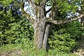 7 Eichen Kuhwasen 14.jpg