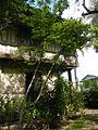9951aajfPelagio Leon Mansions Housefvf 33.jpg