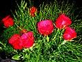 A@a δώρο αγάπης - panoramio (6).jpg