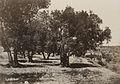 A. Salzmann - Vallée de Hinnom, Champ du Sang - Jerusalem.jpg