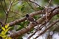 A Bird in Wilpattu National Park 07.jpg