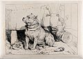 A burly terrier with cropped ears sitting on a ramskin, besi Wellcome V0023221.jpg