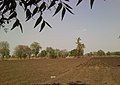 A farm in Hingna Balapur (new), a different view - panoramio.jpg