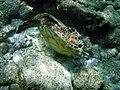A feeding turtle.jpg