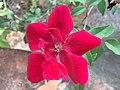 A flor vermelha.jpeg