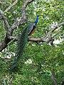 A rainbow on the branch.jpg