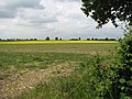A strip of bright yellow - geograph.org.uk - 1347834.jpg