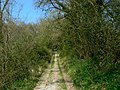 A view up a bridleway north of Wootton Rivers - geograph.org.uk - 402204.jpg