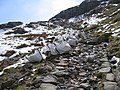 A walk up the Pyg track - bags of rocks - geograph.org.uk - 773267.jpg