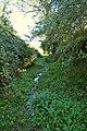 A waterlogged footpath to North Lobb near East Saunton Farm - geograph.org.uk - 2126273.jpg