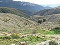 Abella de la Conca. La Torre d'Eroles. Barranc de Cal Palateres.JPG