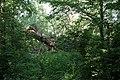 Abgeknickter Baum am Faulen See (Berlin-Weißensee).jpg