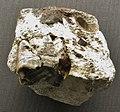 Aceratherium lemanense upper tooth.jpg