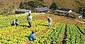 Agricultura .jpg
