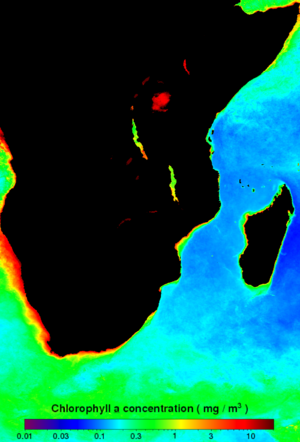 Agulhas Current - Mean chlorophyl-a concentration map of the Agulhas Current for 2009. Note the high productivity water in the Agulhas Retroflection.