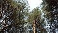 Aleksin, Tula Oblast, Russia - panoramio (94).jpg