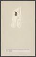 Aleochara - Print - Iconographia Zoologica - Special Collections University of Amsterdam - UBAINV0274 001 02 0019.tif