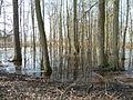 Alluvial forest - Horka nad Moravou.JPG